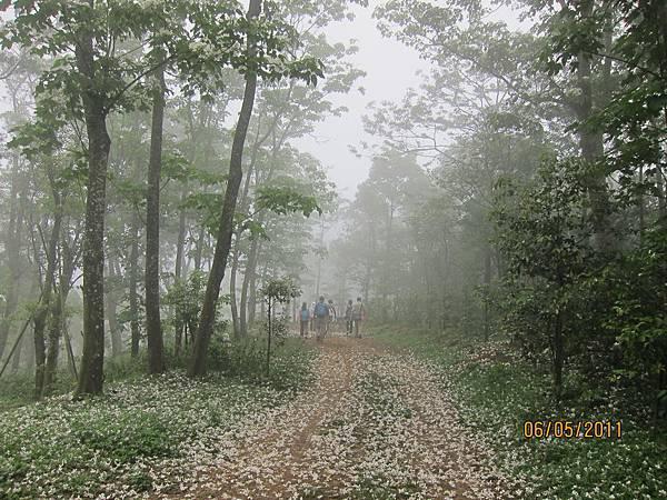 IMG_1479.五月雪步道