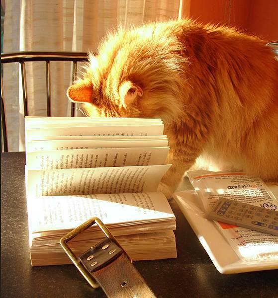 Cat_with_book_2320356661 拷貝.jpg