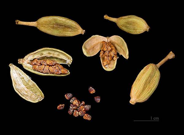 800px-Elettaria_cardamomum_Capsules_and_seeds