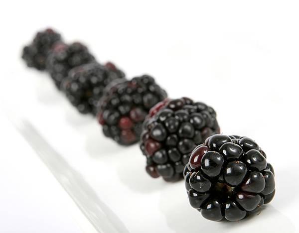 berry-1239108_1280.jpg