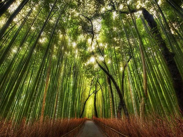 La-forêt-de-bambou-dArashiyama-Kyoto-Japon-photo-03