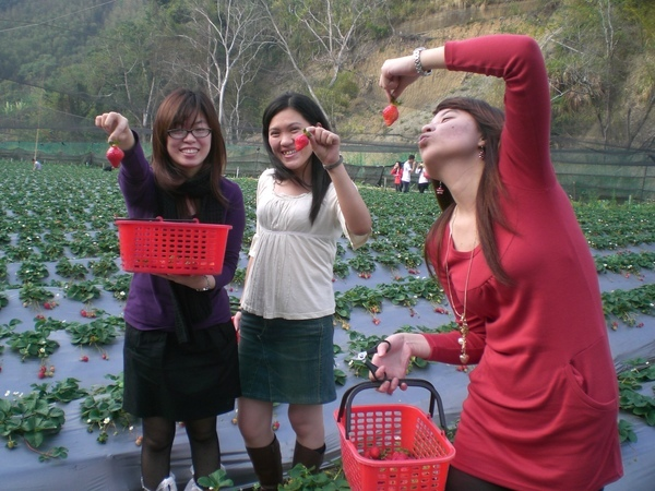 流星吻草莓