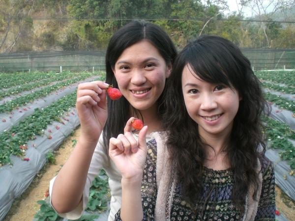 貝貝和小文怪怪形狀苺