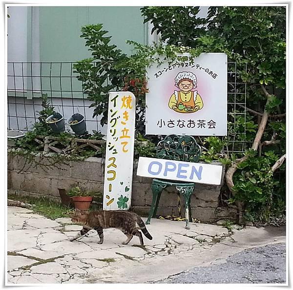10.06第一天-i貓參加茶會
