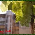 nEO_IMG_PC240527.jpg