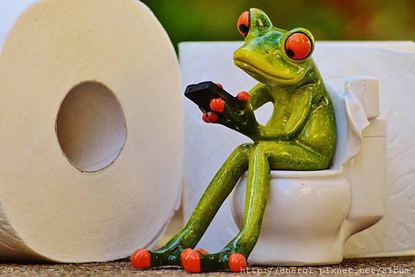 frog-1037251_1920.jpg