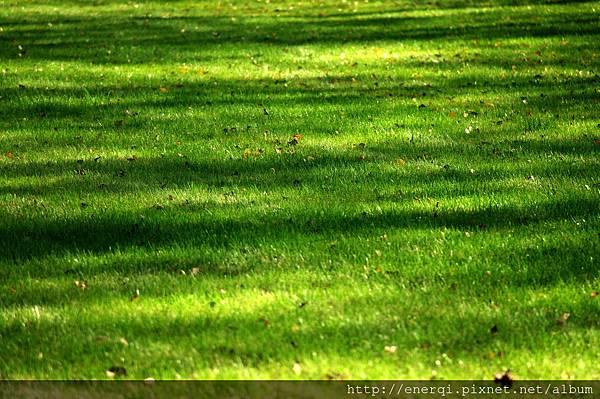 grass-727207_1920.jpg