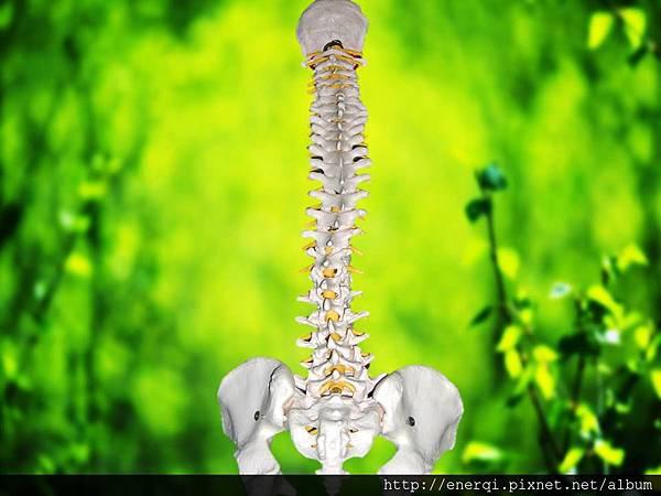 脊椎.jpg