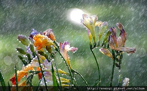 3840x2400-flowers-rain-drops-nature.jpg
