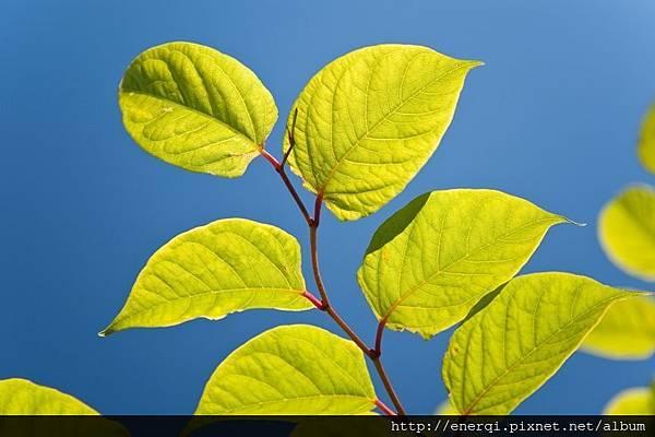 tree_MJa_FV9d.jpg