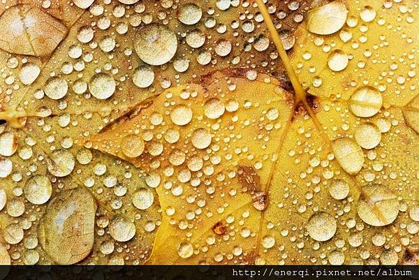 balance-gefuehle-entspannung-meditation-water-drops-on-a-maple-leaf-0-0-4b047e1f74198-1b762d.jpg