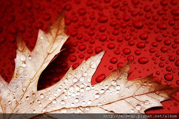 red leaves wet water drops desktop background wallpaper.jpg
