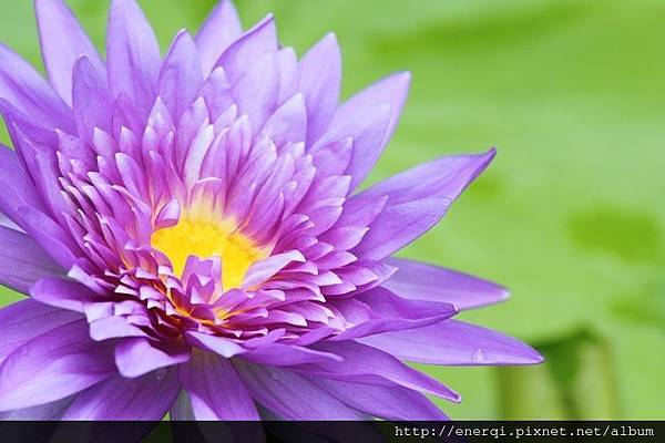 lotus_fkFDD9BO.jpg