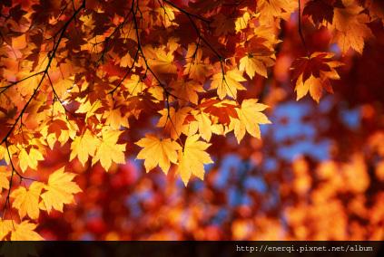 Autumn-Leaves-Sunshine.jpg