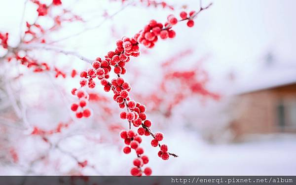 berries-red-branch-tree-winter-nature-1.jpg