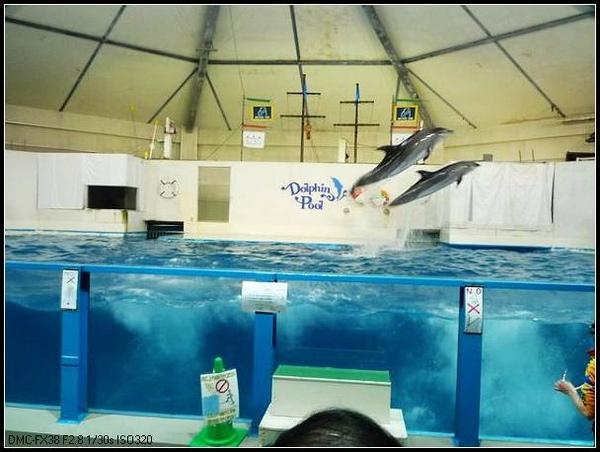 雙飛海豚.JPG