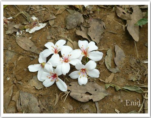 枯樹葉與花