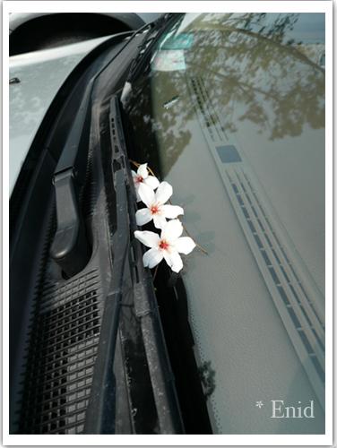 幾乎每台車上都有這個小小紀念品