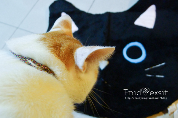 小獅與贈品貓頭地毯拍照
