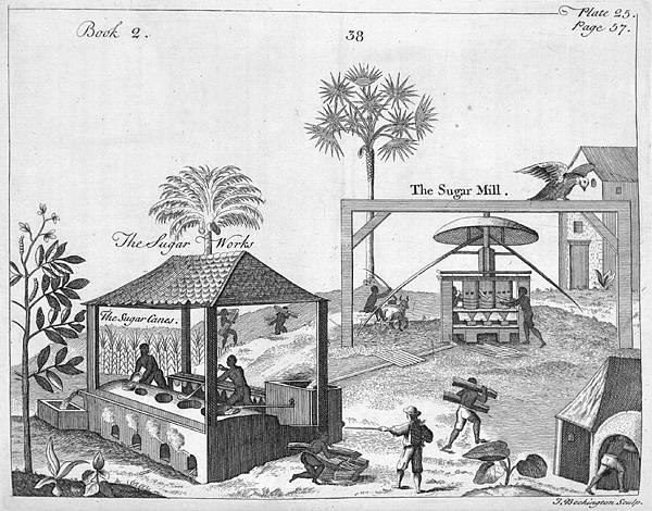 P.43-005 甘蔗提煉