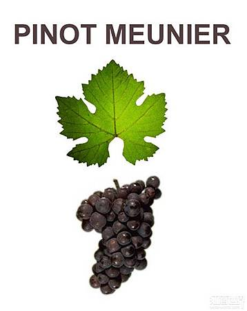 -IMG-GrapeVarietyImg-Pinot Meunier.jpg