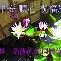 MS030-056.jpg