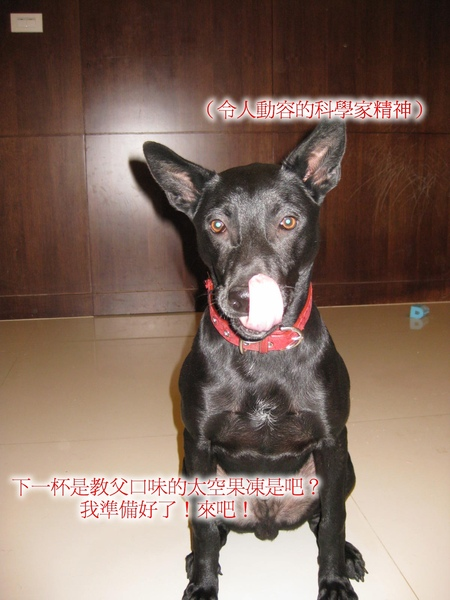C3-015科學犬.jpg