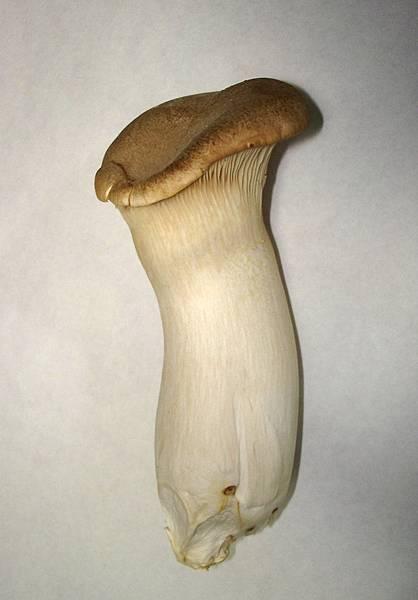 Pleurotus_eryngii