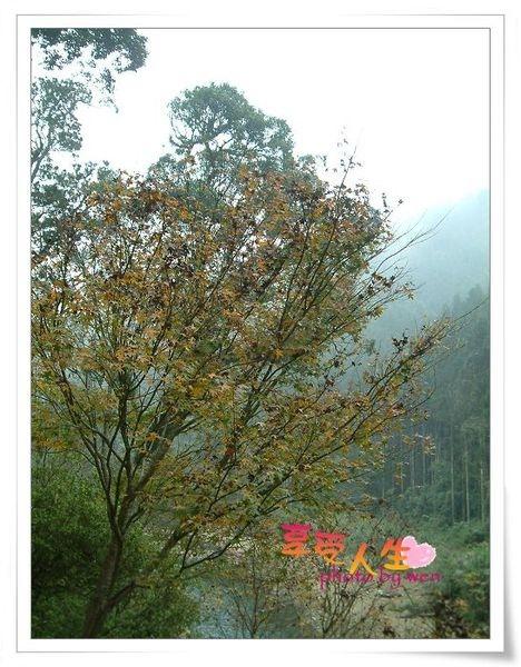 http://pics21.blog.yam.com/11/userfile/e/enjoylife22/album/1496b19b464e47.jpg