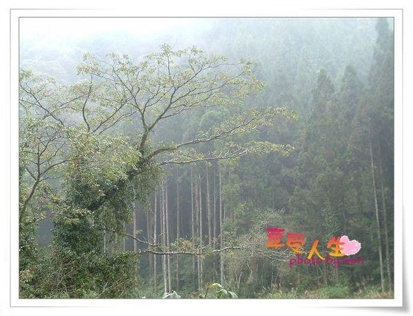 http://pics21.blog.yam.com/11/userfile/e/enjoylife22/album/1496b19bbc9873.jpg