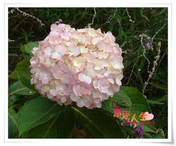 http://pics21.blog.yam.com/14/userfile/e/enjoylife22/album/1496b19caa2988.jpg
