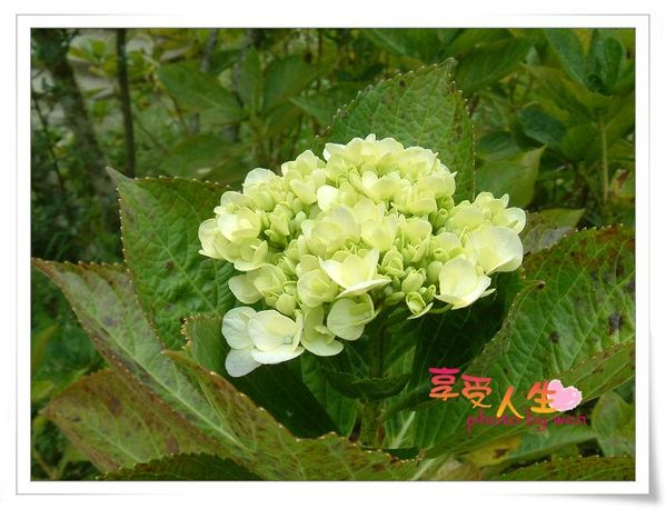 http://pics21.blog.yam.com/13/userfile/e/enjoylife22/album/1496b19ed7b991.jpg