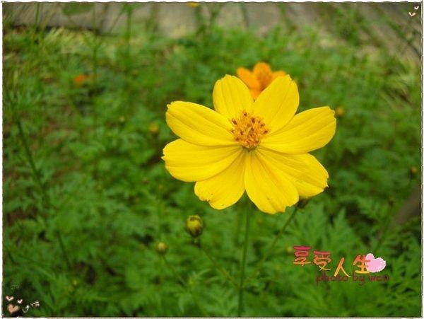 http://pics21.blog.yam.com/13/userfile/e/enjoylife22/album/148bec575ec17f.jpg