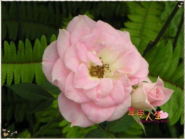 http://pics21.blog.yam.com/13/userfile/e/enjoylife22/album/148bec58411210.jpg
