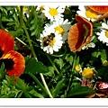 http://pics21.blog.yam.com/13/userfile/e/enjoylife22/album/148ce98977e07e.jpg