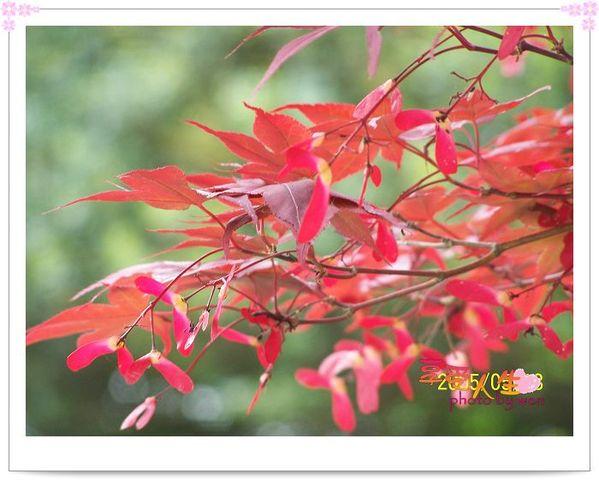 http://pics21.blog.yam.com/13/userfile/e/enjoylife22/album/148ce98c8e6d0b.jpg