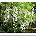 http://pics21.blog.yam.com/13/userfile/e/enjoylife22/album/148ce98dea3793.jpg