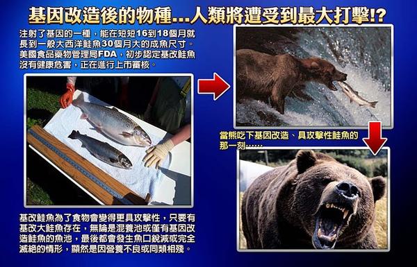 1209-熊吃基因鮭.jpg