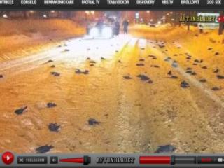 瑞典西部城市也傳出有鳥群集體死亡.jpg