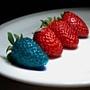 的轉基因農產品
