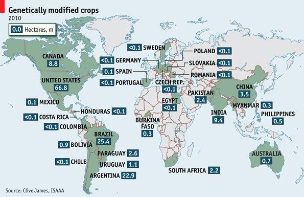 大部份轉基因食物都在發達國家和新興經濟體裡生產
