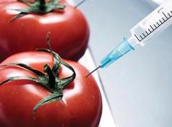 鮮豔奪目的轉基因農產品