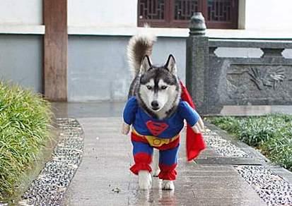 成都超人狗.jpg