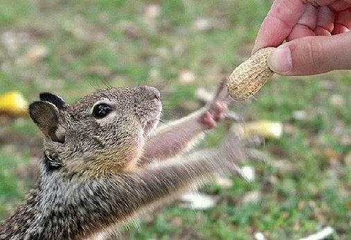 要花生的小松鼠.jpg