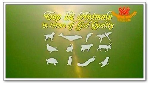 上帝品質最高的十二動物.jpg