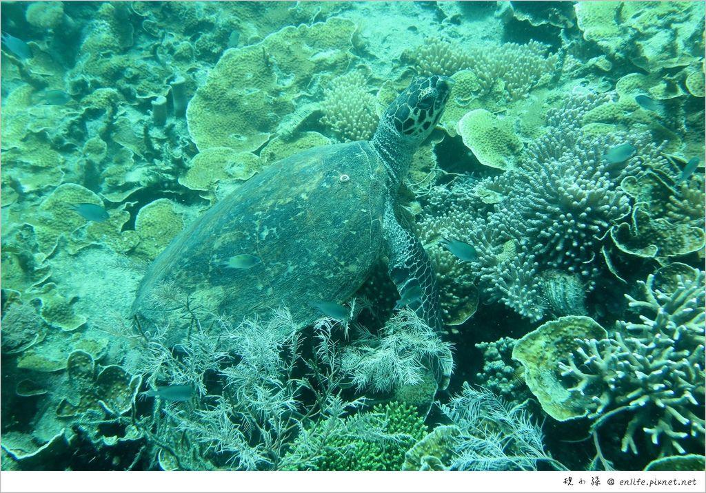 那天你們預見的海龜.JPG