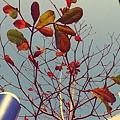 C360_2014-02-25-10-10-24-060.jpg