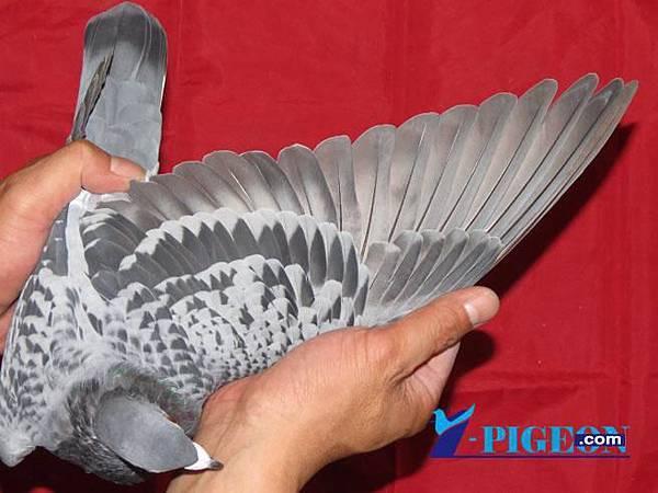 13-509855翅膀.jpg