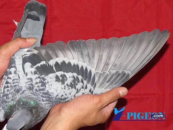 13-509856翅膀.jpg