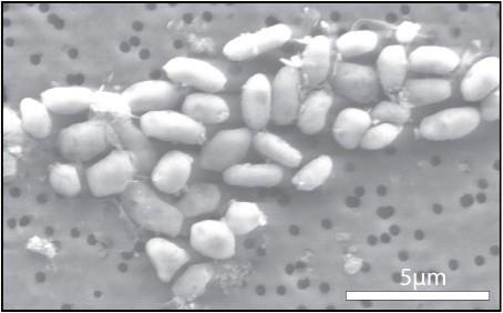 arsenic-creatures-rm-eng.jpg